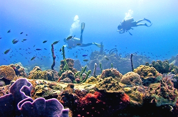live coral reef