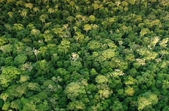 rainforest - the lungs of the earth